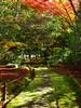 西芳寺(苔寺) Moss garden of Saihoji (Eiki Wang) Tags: saihoji kyoto moss momiji garden 世界遺產 西芳寺 西芳寺さいほうじ 苔寺 苔寺こけでら 京都 楓 紅葉