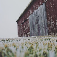 Insane textures happening this morning. (jessalynn_sammons) Tags: shotoncanon canoncanada canon perspective ground green grass barn textures texture rustic winter cold ice frost instagram ifttt