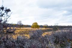 Heath in Gasteren, the Netherlands (j.a.vink) Tags: heath netherlands 1855 fujifilm1855mm fujifilmxt2