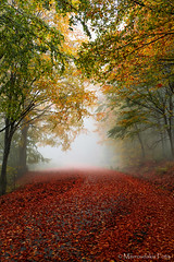 Autumn in the forest (Mavroudakis Fotis) Tags: forest dreamscape autumn woods trees vivid foliage lush nature rays outdoors path road trunk colorful yellow greece europe destination traveling hikking mountain leaves
