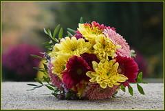 Blumengruß zum Sonntag  ... (Kindergartenkinder 2018) Tags: blumen kindergartenkinder