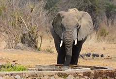 _DSC9029 (acomb) Tags: tanzania roadtrip ruaha tandala