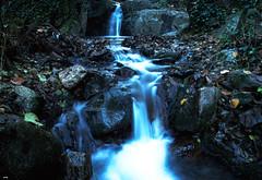 Pasa la corriente (candi...) Tags: corriente cascada agua rocas sonya77 figarómontmany bosque arboles naturaleza nature airelibre