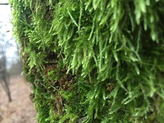 moss, green and thick moss (Lina (Prema) Polmonari) Tags: parconord fontana fountains bench panchina moss mushrooms flowers pond laghetto abitanti cani padrone dogs bicycle bicicletta dragoverde fontanella games giochi children bambini foglie leaves gialle yellows