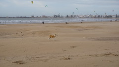2016-01-08_16-00-59_ILCE-6000_DSC02723 (Miguel Discart (Photos Vrac)) Tags: 2016 75mm beach chien citytrip dog dogs epz1650mmf3556oss essaouira focallength75mm focallengthin35mmformat75mm holiday ilce6000 iso100 landscape maroc morocco plage sony sonyilce6000 sonyilce6000epz1650mmf3556oss travel vacance vacances voyage