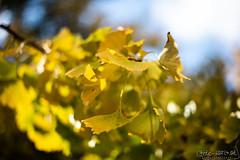 Graz November 2018_Karin Wernig_0030 (Foto-Karin.at) Tags: graz stadtpark austria herbst autumn technic natur dach altstadt überdendächern ginko wind