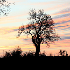 Juste avant la nuit (Catherine Reznitchenko) Tags: normandie crépuscule silhouette arbre ciel extérieur outdoors dusk sky nuages clouds couleurs colors vegetation europe branche tree season saison automne autumn plante paysage atmosphere atmosphère lumière light sunlight sunset pelouse coucherdesoleil art landscape fineart nature lonetree catherinereznitchenko
