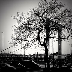 Without leaves but so beautiful 💕 (Photolover03) Tags: budapest tree blackwhite