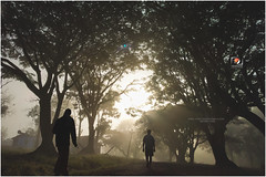 mob2 (cambala @ viewfinder) Tags: morning sunrise walk mist trees forest sunrase morningwalk chiloute mobileclick