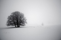 White dream (PaxaMik) Tags: winter winterlandscape wintertree tree arbredhiver snow neige plateauderetord retord black blackandwhitephotos white dream dreaming quiet zen blancheur noiretblanc france montagne alpes mountain