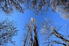 Bosc d'hivern (Xevi V) Tags: catalonia catalunya pallarssobirà pyrénées pirineucatalà llagunes boscdhivern valldesiarb bosc forest isiplou llocsambencant pyrenees