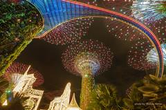 Super tree christmas treat (NoRizSar) Tags: garden singapore supertree gardenbythebay nightlights fujifilm xt2 fujinon1024