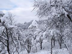 meseerdő, meseház / forest fairy house (debreczeniemoke) Tags: tél winter hó snow fehér white erdő forest fa tree ház house olympusem5