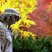 """Cincinnati – Spring Grove Cemetery & Arboretum """"Angelic Autumn Walk"""