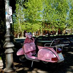 Motorino da Ragazza, Pisa (pom'.) Tags: pisa tuscany toscana italy italia 2018 april panasonicdmctz101 100 200 europeanunion vespa piaggio motorbike motorino rose rosa 0961 5000