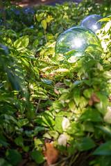 IMG_9406 (noemi_bt) Tags: plantas natureza tons cor jardim primavera bahia plants nature colorful garden brazil salvador verde green