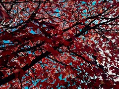 """NOVEMBER"" §aⓕⓕ §unset  Ph[⭕]tography  #PHOTOMOVIL #photography #nature #paisajes #landscape #colors #ngc #NATURALEZA #huawei #leaves #expressión #autumn #imagination #flowers #flores #colores #natural #saffsunset #day #sun #noviembre #vilagarciadearous (saffsunset) Tags: riadearousa blue colores ngc sun colors galicia leaves paisajes day noviembre flowers flores natural nature saffsunset imagination pontevedra photomovil expressión vilagarciadearousa red huawei galifornia naturaleza autumn photography landscape"