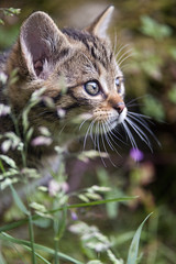 Next cutie! (Tambako the Jaguar) Tags: wildcat feline wild baby young kitten cute profile portrait close grass vegetation flowers spring curious tierpark goldau zoo switzerland nikon d5