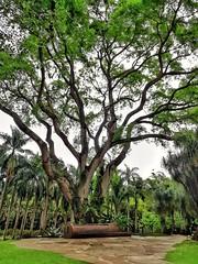 tamboril (jakza - Jaque Zattera) Tags: banco jardim árvore tamboril inhotim frenteafrente perpetual gamewinner