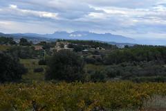 Montserrat des de Can Barceló (esta_ahi) Tags: canbarceló santmartísarroca penedès barcelona spain españa испания vinya viña viñedo vineyard vitisvinifera montserrat paisaje paisatge landscape