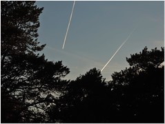 Heavenly Geometry (MaxUndFriedel) Tags: nature wood sky heaven lines pine tree autumn fall