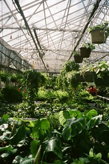 line_7 (acylay) Tags: 35mm 35mmfilm filmphotography analog greenhouse horticulture plants