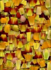 59290.01 Hemerocallis (horticultural art) Tags: horticulturalart hemerocallis daylily petals sepals petalsandsepals cuts pattern