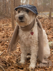 hurry up, I'm cold (Eric.Ray) Tags: dog color canon eosm outdoors animal pet cold brown leaves