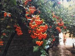 Jesień w Anglii (basiamarcisz) Tags: barbakan thebarbican london londyn anglia england autumn jesień
