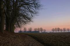 The daybreak - Orp-Jauche - Belgium (roland_tempels) Tags: belgium supershot landscape sky nature orpjauche trees fields wallonie