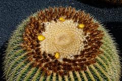 Jardin de Cactus, Lanzarote (wildhareuk) Tags: cactus cactusgarden canaryislands canon canoneos400d flora lanzarote jardindecactus lanzarote2007 img2875dxo