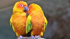 Papageien - wie ein Liebespaar (Sanseira) Tags: zoo augsburg papageien tropenhalle liebespaar