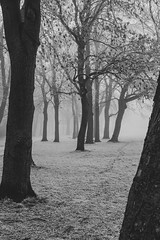 Crossflatts Park, Leeds (Richard Croft136) Tags: beautiful beauty nature ls11 beeston white bw black yorkshire west forest woods woodland park morning frosty weather cold frost snow winter mist grass sky tree landscape field
