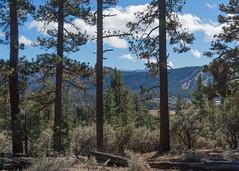Old Grayback (San Bernardino Nat'l Forest) Tags: woodlandtrail naturetrail bigbear hikingtrail sangorgonio