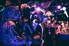 8M5A3754-27 (loboloc0) Tags: furries frolicparty frolic party furry club dance suit suiter fur fursuit dj sf san francisco indoor people costume performer animal blur portrait