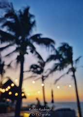 Half light (Mister Blur) Tags: half light ambient dusk golden hour sunset palm trees uaymitún progreso yucatán méxico beach sea playa mar blurry lights blur bokeh desenfoque iphone xr iphoneography craig armstrong snapseed rubén rodrigo fotografía