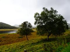 Part Of The River Spey Near Fuaran na Fenne, Sept 2017 (1) (Janpram) Tags: scotland walkinglandscape scottishcountryside scottishlandscape landscape countryside trees rain riverspey