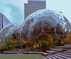 Sphere Plaza (4 Pete Seek) Tags: seattle amazon sphere glassbuilding amazonsphere downtown downtownseattle rokinon rokinon12mm wideangle manualfocus