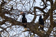 Ethiopia, Oromia (Ninara31) Tags: nature bird africanbird langano