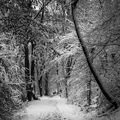 December in b&w (marinachi) Tags: bw black white trees december winter snow sundaylights bochum germany