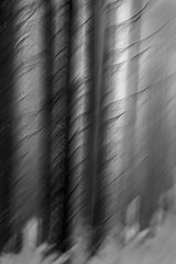 Does A Bogeyman Lives in Bellever Forest (Wayne Elsworth) Tags: trees icm me abstract multipleexposure dartmoor forest