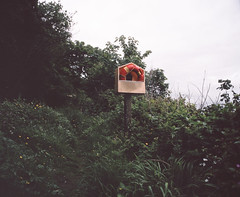 Courtmacsherry (nikolaijan) Tags: mamiya rb67 120 c90mmf38 fuji film ireland forest fern provia400f courtmacsherry green rescue sos coast shrubs