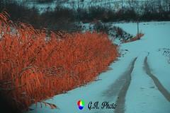 La neve: il silenzio sui colori!!! (Gianni Armano) Tags: la neve il silenzio sui colori foto gianni armano photo flickr