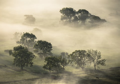 Beneath The Inversion (ANG Imagery) Tags: cow trees abstract sidelight atmospheric inversion rural derbyshire atmosphere hopevalley countryside sunrise morning dawn landscape peakdistrictnationalpark misty