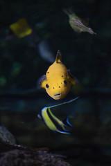 Aquarium of the Pacific. (LisaDiazPhotos) Tags: aquarium pacific lisadiazphotos