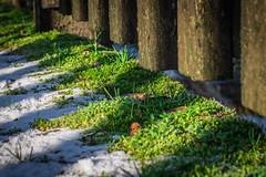 Ja, haben wir denn schon Frühling? (Doblinus) Tags: schleswigholstein oeversee moos zhongyilensturboii minolta minolta3570mmf35 andertreene germany fotowalk treene holzbrücke holz manuellesobjektiv altesobjektiv