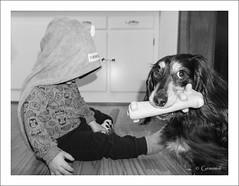 Shrouded (* Gemini-6 *) Tags: boy dog toddler dachshund pet animal face framed blackandwhite