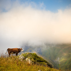 French Alps Mountains (Zeeyolq Photography) Tags: mountains france alps landscape alpes alpage cow albiezmontrond