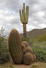 Arizona (Treflyn) Tags: collection cactus desert cacti mesa rare cloudy day arizona