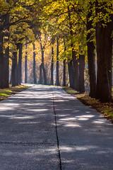 Autumn in Corsendonk (cstevens2) Tags: antwerpenprov autumn belgique belgium belgië corsendonk europe fall fallcolours flanders flandre oudturnhout vlaanderen bomen herfst herfstkleuren najaar trees